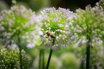 Bij op een bloem, zachte foto van Patrick Verhoef