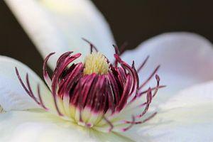 a flower in the spring van