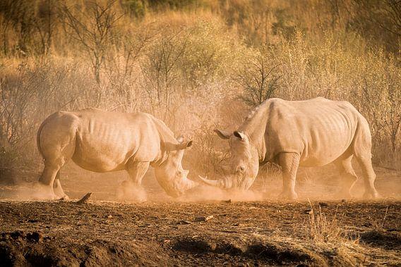 Fighting Rhino