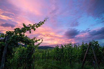 Zonsondergang in de wijnvelden van de Elzas van Discover Dutch Nature