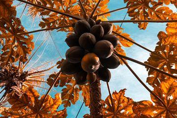 Infrarood foto van papaja's in de boom van Adri Vollenhouw