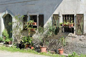 Pflanzen vor einem Haus von Heiko Kueverling