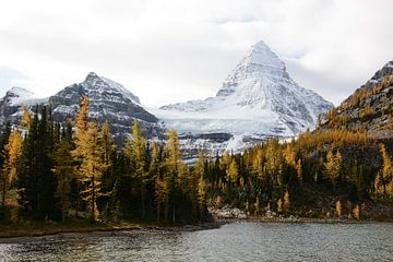 Mt Assiniboine in herfst van Femke van Egmond
