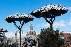 Sneeuw op pijnbomen in Rome