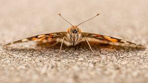 Oog in oog met een vlinder. van
