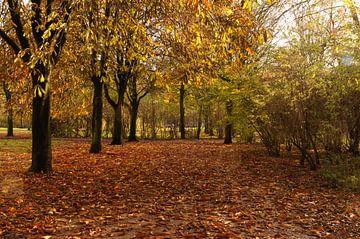 pad in het bos  von Robert Lotman