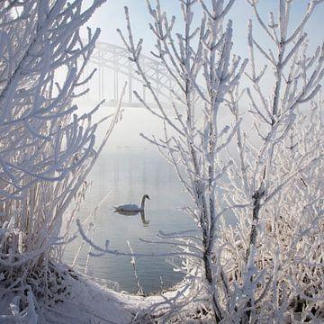 Winter Swan von Edwin van Nuil