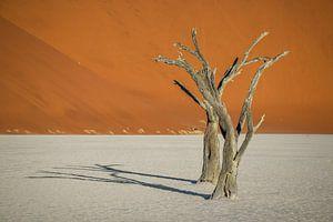 Schitterend landschap van de Deadvlei in de Namib Woestijn in Namibië.