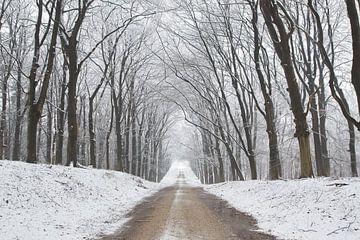 Winter laan von Cor de Hamer