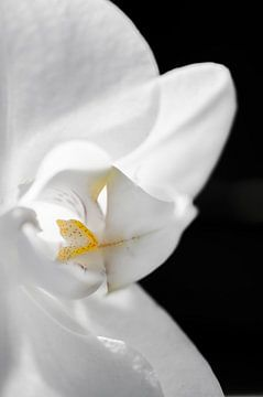 Orchidee van Robby Stifter