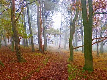 Follow me... (Pfad im Wald) von Caroline Lichthart