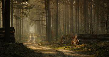Waldspaziergang von Jan Paul Kraaij