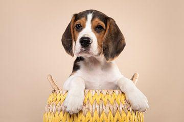 Beagle Welpe auf einem cremigen Hintergrund von Elles Rijsdijk
