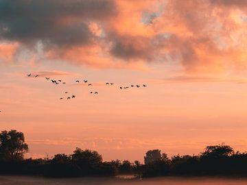 Vogels bij zonsondergang van Diane van Veen