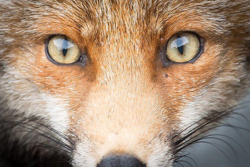 into your eyes! van Kris Hermans