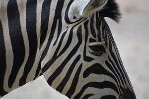 Zebra close up van Natascha Nabuurs
