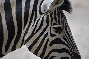 Zebra close up von Natascha Nabuurs
