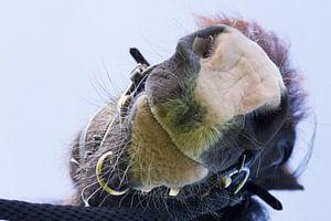 Paardengroet von Colette Molin
