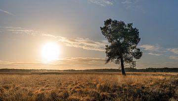 Zonsopgang op de Regte Heide van GoirlebyMurat