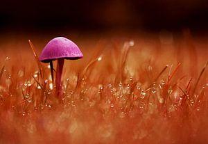 Eenzame paddenstoel oranje/lila van