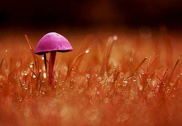 Eenzame paddenstoel oranje/lila von C Dekker