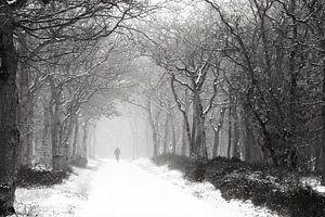 Crossen door de bossen van