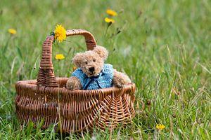 Teddybeer in een mandje van
