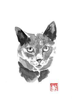 graue Katze 03