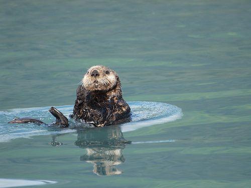Otter Kenai Fjords NP - Alaska  van