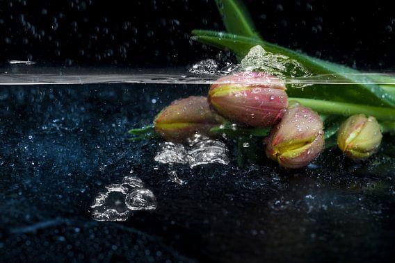 tulips van Tilo Grellmann