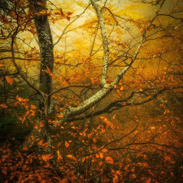 a Walk in the Woods sur Marja van den Hurk