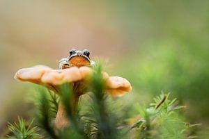 Een kikker op zijn troon van