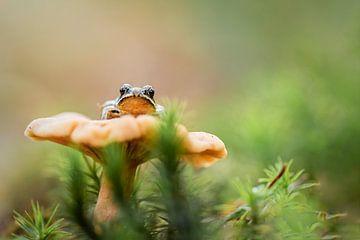 Een kikker op zijn troon sur Astrid Broer