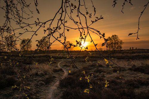 Zonsondergang op de Veluwe bij Ede