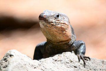 Close-up salamander van Quint Wijnhoven