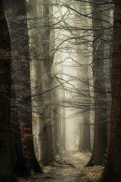 Wald der Kleiderbügel von Lars van de Goor