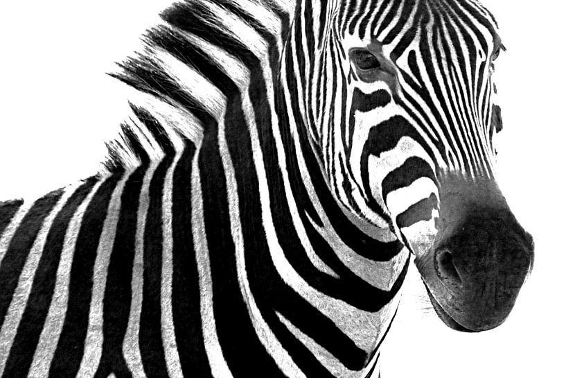 Portret van een zebra in zwart wit van Heleen van de Ven