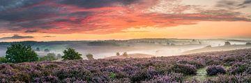 Panorama bloeiende heide op de Posbank van