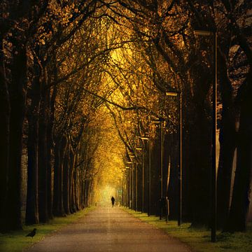golden lane van
