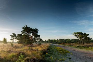 Sonnenaufgang Kalmthausse Heide von Bart van Dongen