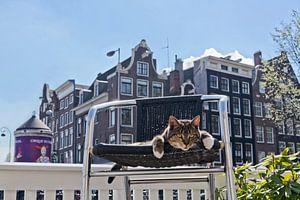 Amsterdam Pubcat