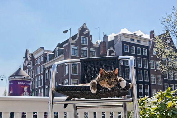 Amsterdam Pubcat van Robert van Willigenburg