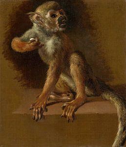 A Seated Monkey, Jan Weenix
