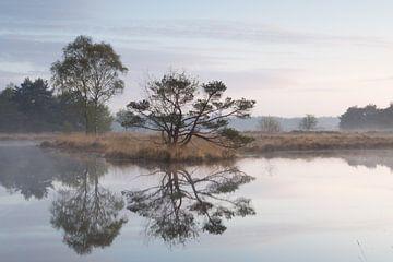 Landschap vroeg in de ochtend van Art Wittingen