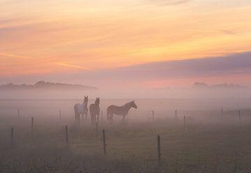 Neblige Pferde von Quirien Marijs