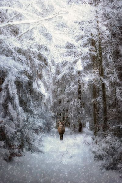 Wintermärchen von Claudia Moeckel