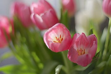 Tulipes sur Marianna Pobedimova