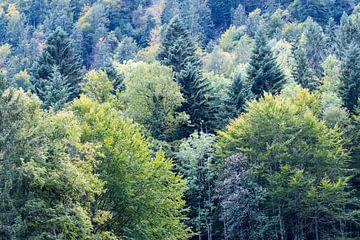 Les arbres dans la forêt sur Idema Media