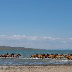 Pferde im Wasser von Daan Kloeg