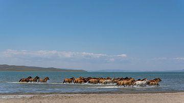 Paarden in het water van Daan Kloeg